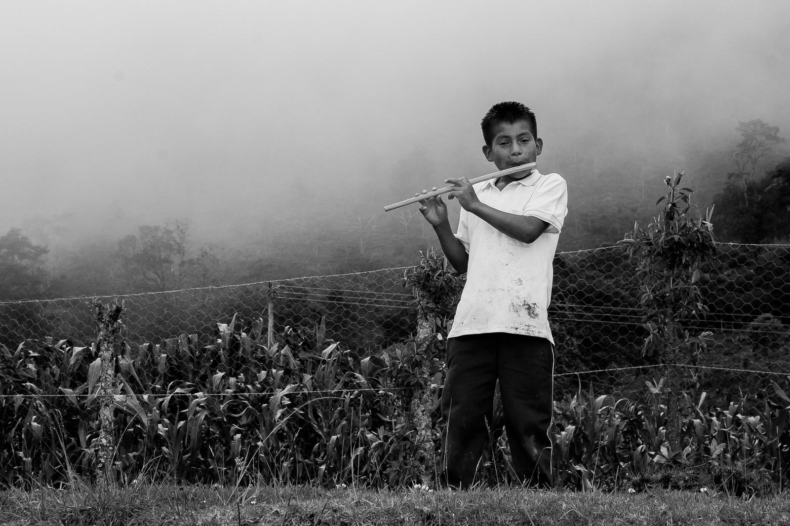 Fotografía de un joven Nasa Yuwe tocando flauta junto a un cultivo de maíz en la vereda Solapa, municipio de Jambaló