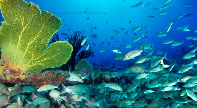 Día mundial de los mares, reserva azul de vida planetaria