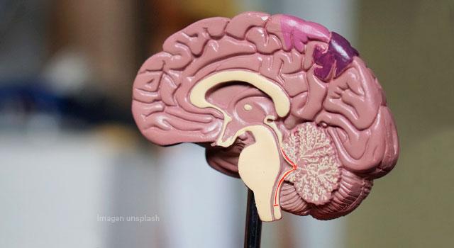 El cerebro: ¿cómo se aprende?