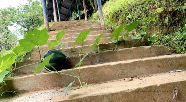 La escuela como entorno protector de la ruralidad en Caquetá