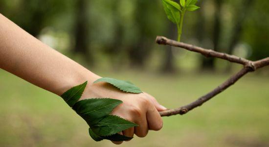Amar la naturaleza