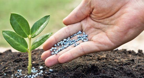 verdes-pensamientos-escuela-extraescolar-alternativa-ecologica-y-comunitaria