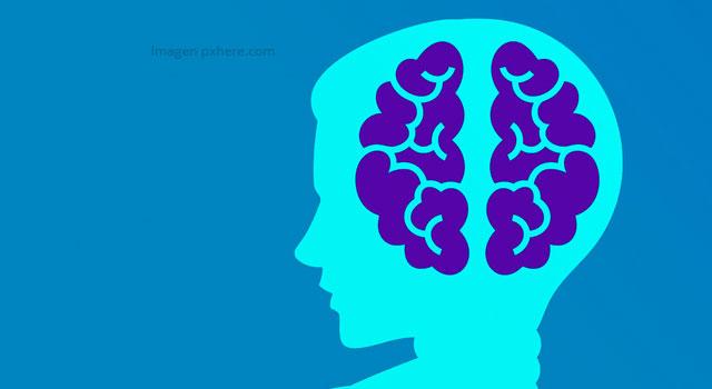 Un currículum neuro-ergonómico